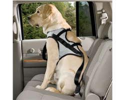Voyager en voiture avec mon chien