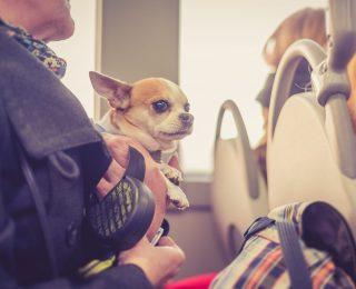 Modes de transports pour voyager avec votre chien