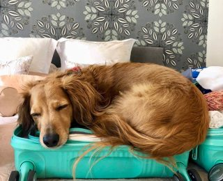 Organiser un voyage avec son chien : conseils & infos