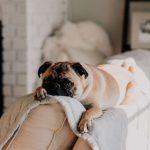 L'anxiété de séparation chez le chien : infos & conseils