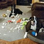 Mon chien détruit tout : 8 conseils pour qu'il arrête