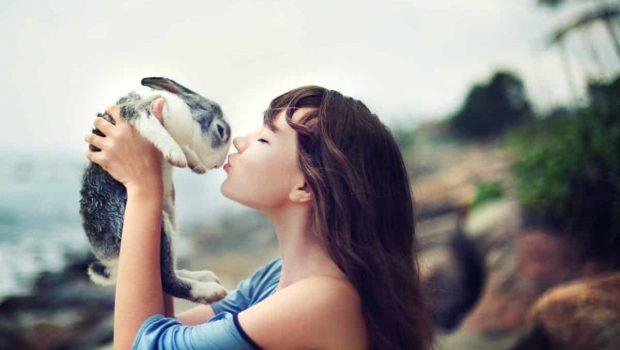 Choisir un lapin : lequel vous faut-il ?