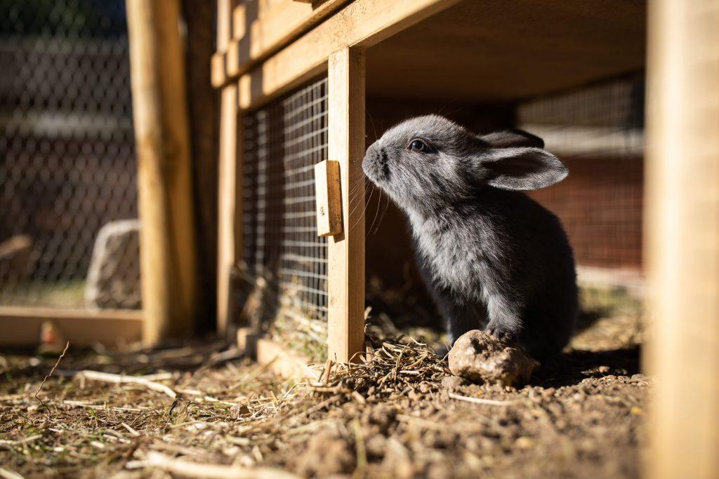 Clapier pour lapins