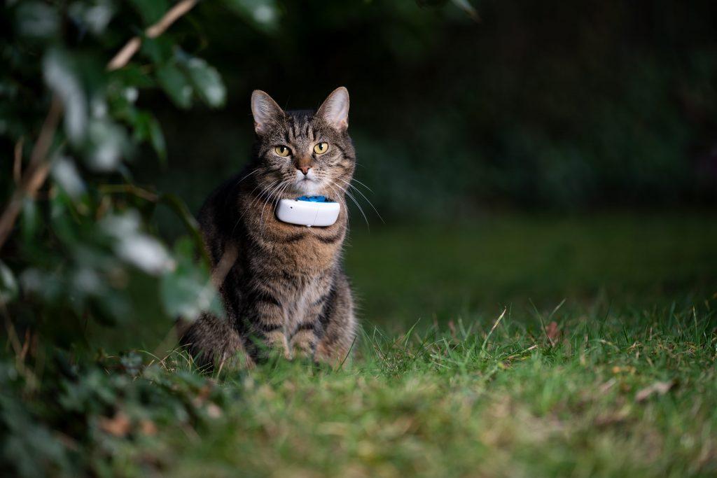 collier gps chat en extérieur