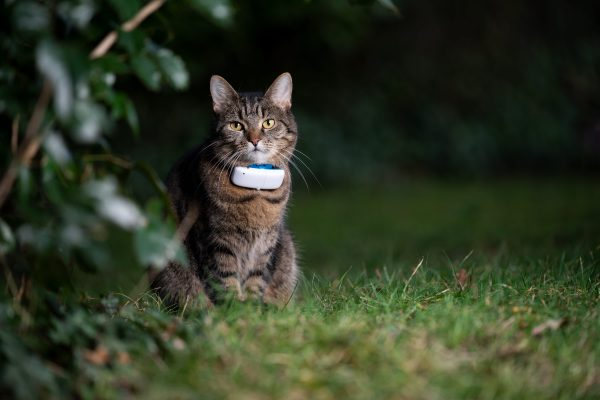 Un collier GPS pour son chat : bonne ou mauvaise idée ?