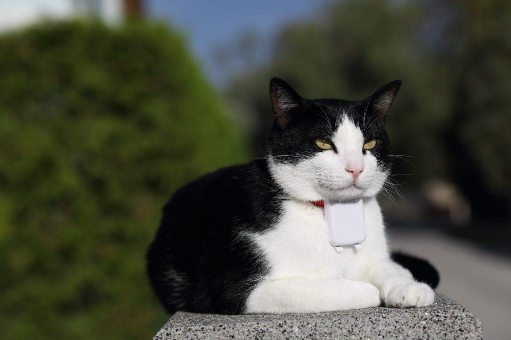Gps fixé au cou du chat