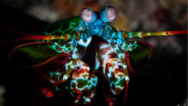 10 animaux avec des super sens à découvrir