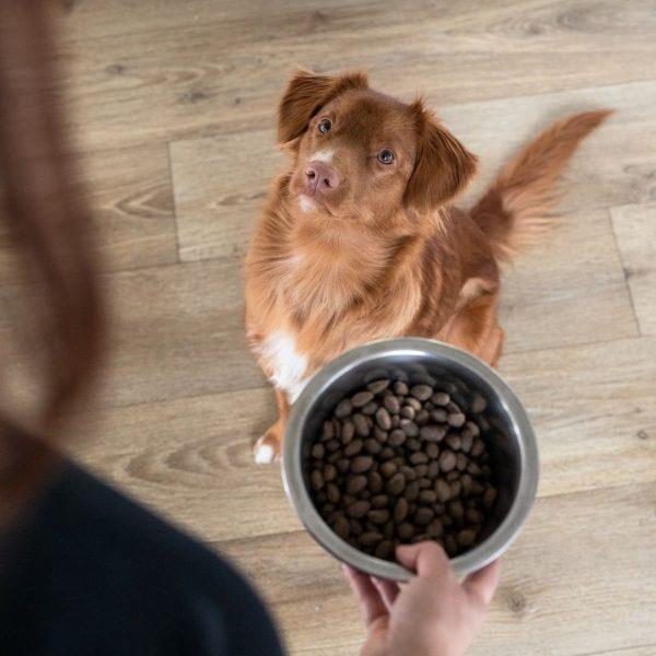 Quelle quantité de croquettes donner à son chien ?