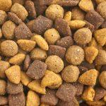 Choisir les croquettes pour son chien