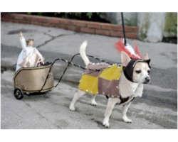 Photos d'animaux qui se déguisent !