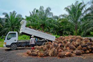 déforestation de l'huile de palme