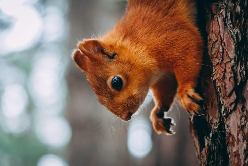 photo d'un écureuil sur un arbre