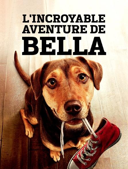 Film l'incroyable aventure de Bella