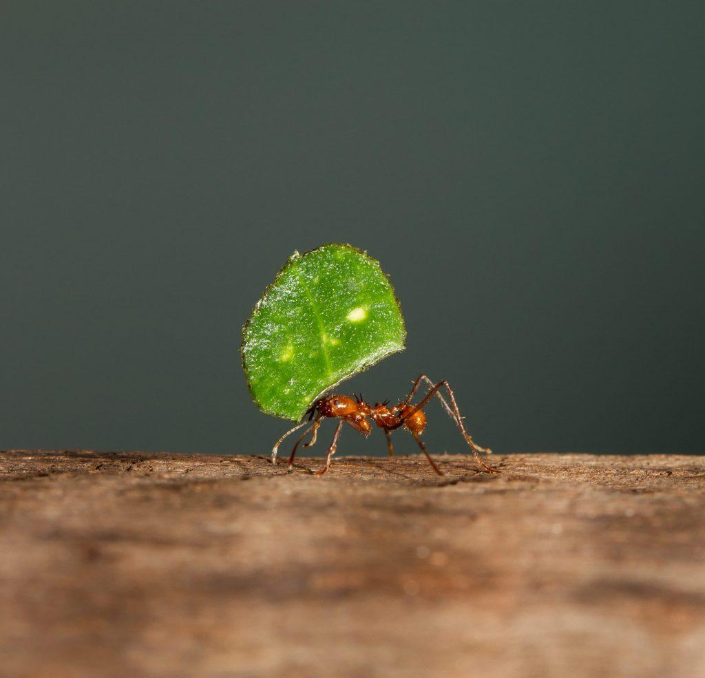 force des fourmis