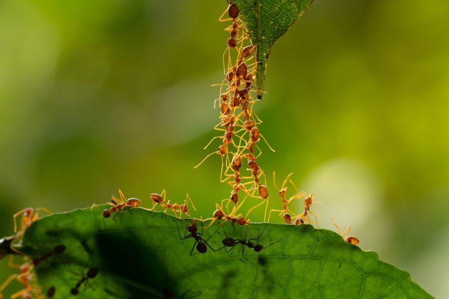 15 faits étonnants à savoir sur les fourmis