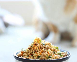 Cuisiner pour son chien : les bases et les proportions