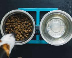 Choisir les bons aliments pour nos animaux