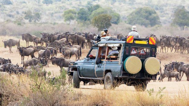 Quels animaux voir au Kenya ?