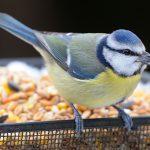 Alimentation des oiseaux : conseils et infos