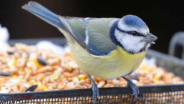 Quelle nourriture pour les oiseaux exotiques ?
