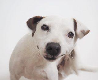 Mon chien se gratte : explications et conseils