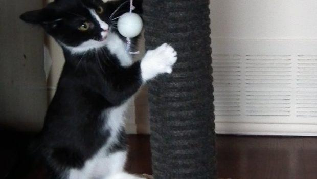 Griffoir pour chat : lequel choisir ?