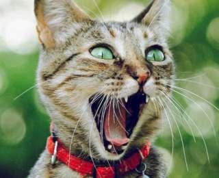 15 photos de chiens et chats qui ont le sourire