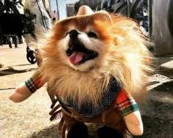 Des animaux déguisés pour Halloween à New York