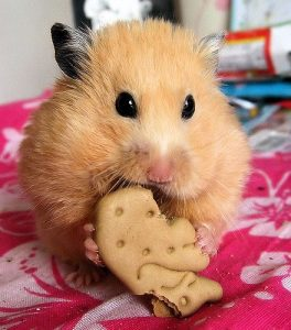 biscuits pour hamster