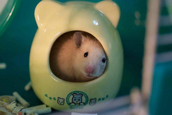 Cage du hamster : la choisir et bien l'aménager