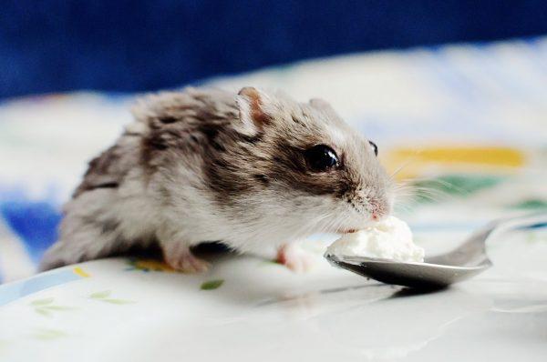 Les vitamines et minéraux pour hamsters