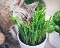 Herbe à chat : à quoi sert-elle et laquelle choisir ?