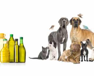 Quelle huile choisir pour son chien ?