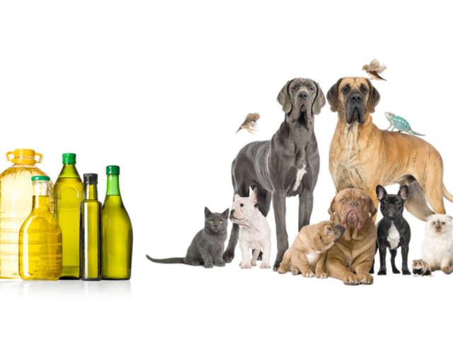 Pourquoi ajouter de l'huile à l'alimentation de son animal