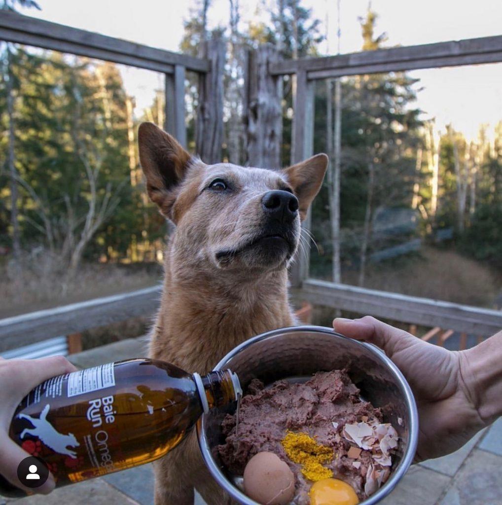huile de poisson gamelle chien
