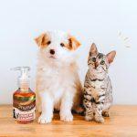 Huile de saumon pour chien : bienfaits et dosage