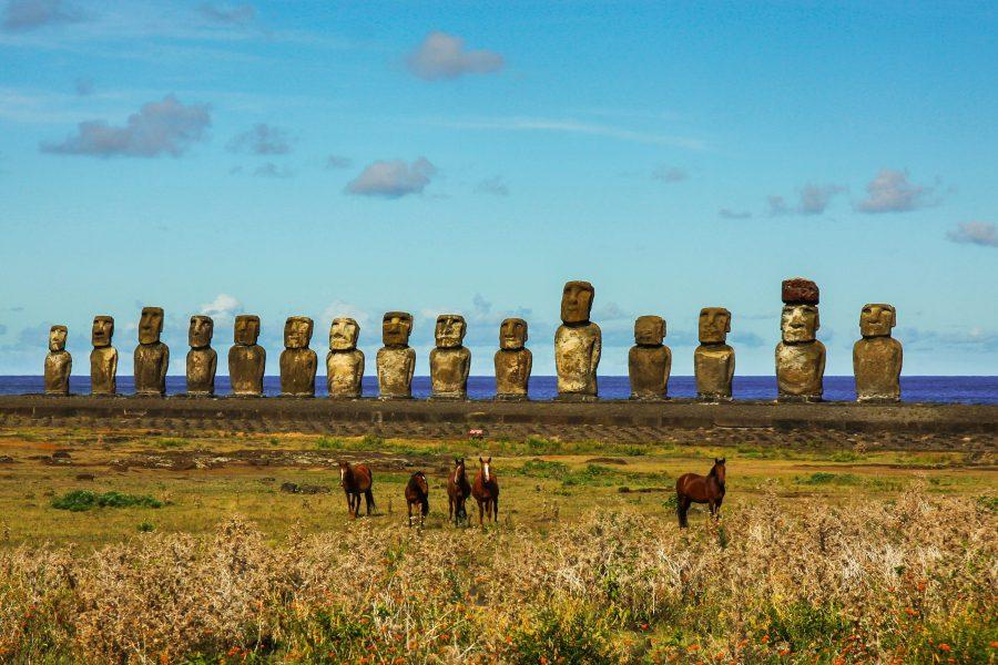Quels animaux voir sur l'île de Pâques ?