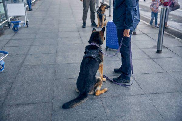 Quand le chien assure notre sécurité