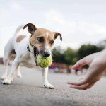 Apprendre à son chien à rapporter