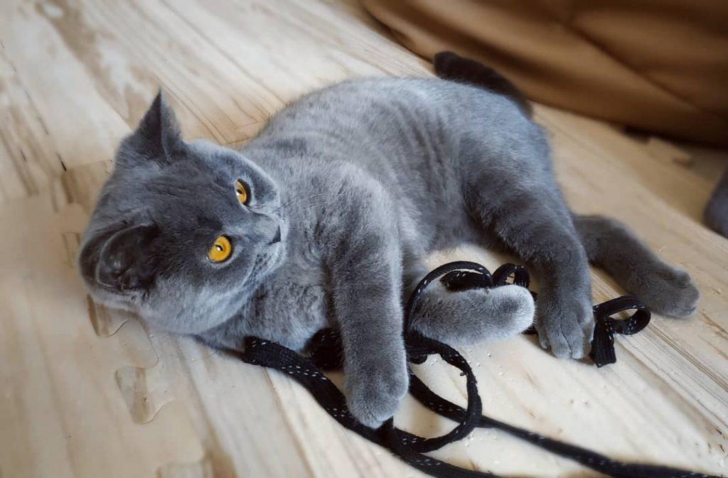 Jeu pour chat