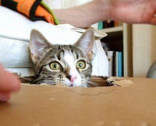Astuces pour habituer son chat à vivre en intérieur