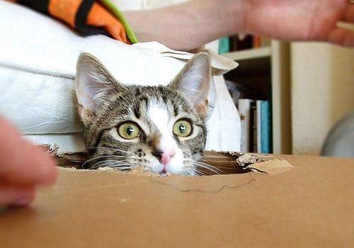 Stimuler son chat à la vie en intérieur