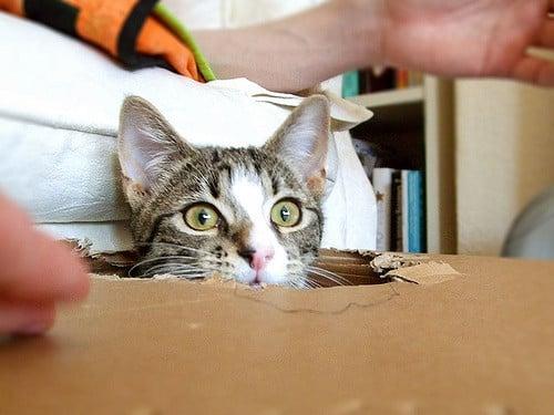 chat carton jeu