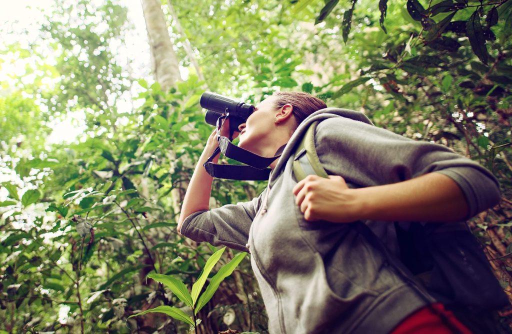 Jumelles pour observer les animaux à photographier
