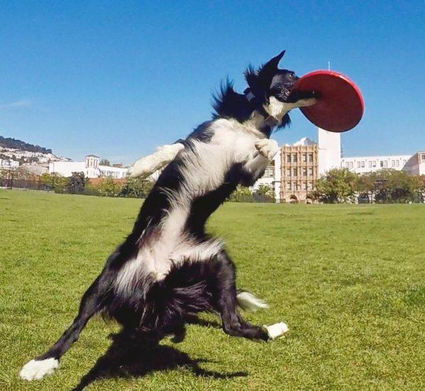Que vaut le frisbee Kong Flyer ?