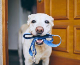 Quelle laisse choisir pour son chien