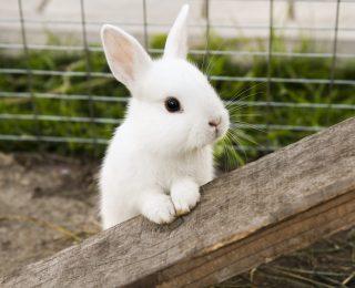 20 faits sur les lapins que vous devez connaître