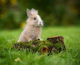Laisser son lapin à l'extérieur