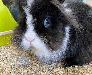 Comportement du lapin nain et signes