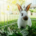 Comment aménager un espace idéal au jardin pour son lapin ?